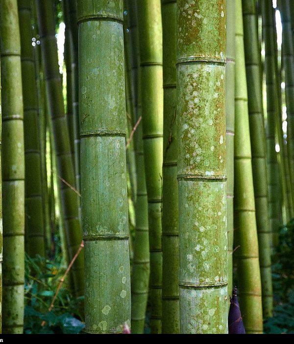 Wat te doen met bamboe