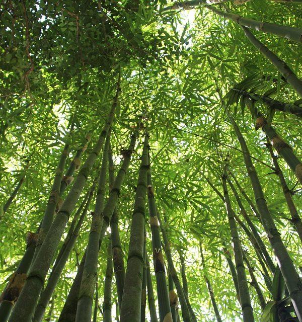 Waarom bamboe voor meubels