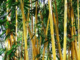 waarom bamboe voor meubels duurzaamheid bamboe voor meubels