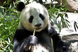 waarom bamboe beter voor meubels duurzaamheid bamboe
