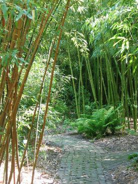 afb: bamboepark van BIC waarom bamboe voor meubels